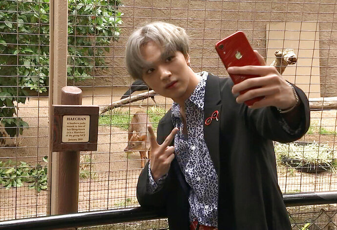 This May 15, 2019 image taken from video shows Haechan of the K-pop group NCT 127 taking a selfie with a baby pudu at the Los Angeles Zoo. Fans of the group donated money to name the baby pudu after Haechan. This week, the human Haechan got to meet his namesake, snapping selfies with the little deer at his enclosure. (AP Photo/Jerry Nulty)