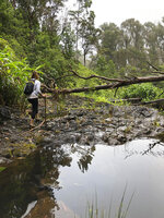 This photo provided by Yesenia D'Alessandro shows a volunteer in the Makawao Forest Reserve in Haiku, Hawaii on May 16, 2019, while searching for Amanda Eller, a yoga teacher and physical therapist who went missing during a hike. The dramatic rescue of a hiker lost for more than two weeks in a remote Hawaii forest is showing how emerging technology is helping search teams more efficiently scour the wilderness for missing people. (Yesenia D'Alessandro via AP)