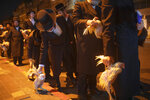 Ultra-Orthodox Jews hold chickens later to be slaughtered during the Kaparot ritual, in Bnei Brak, Israel, Sunday, Sept 27, 2020. Observant Jews believe the ritual transfers one's sins from the past year into the chicken, and is performed before the Day of Atonement, Yom Kippur, the holiest day in the Jewish year which starts at sundown Sunday. The solemn Jewish holiday of Yom Kippur, which annually sees Israeli life grind to a halt, arrived on Sunday in a nation already under a sweeping coronavirus lockdown. (AP Photo/Oded Balilty)