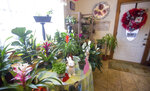 In this Jan. 31, 2020 photo, houseplants and decorations sit for sale inside Blue Ribbon Nursery in Broadway, Va. (Daniel Lin/Daily News-Record via AP)