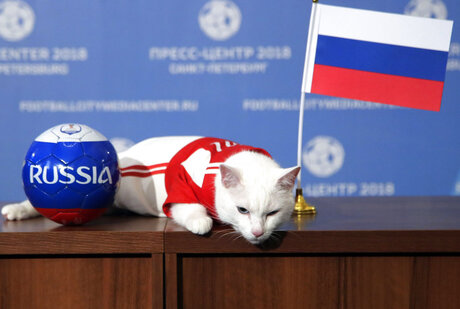 APTOPIX Russia Soccer WCup Cat Predictor