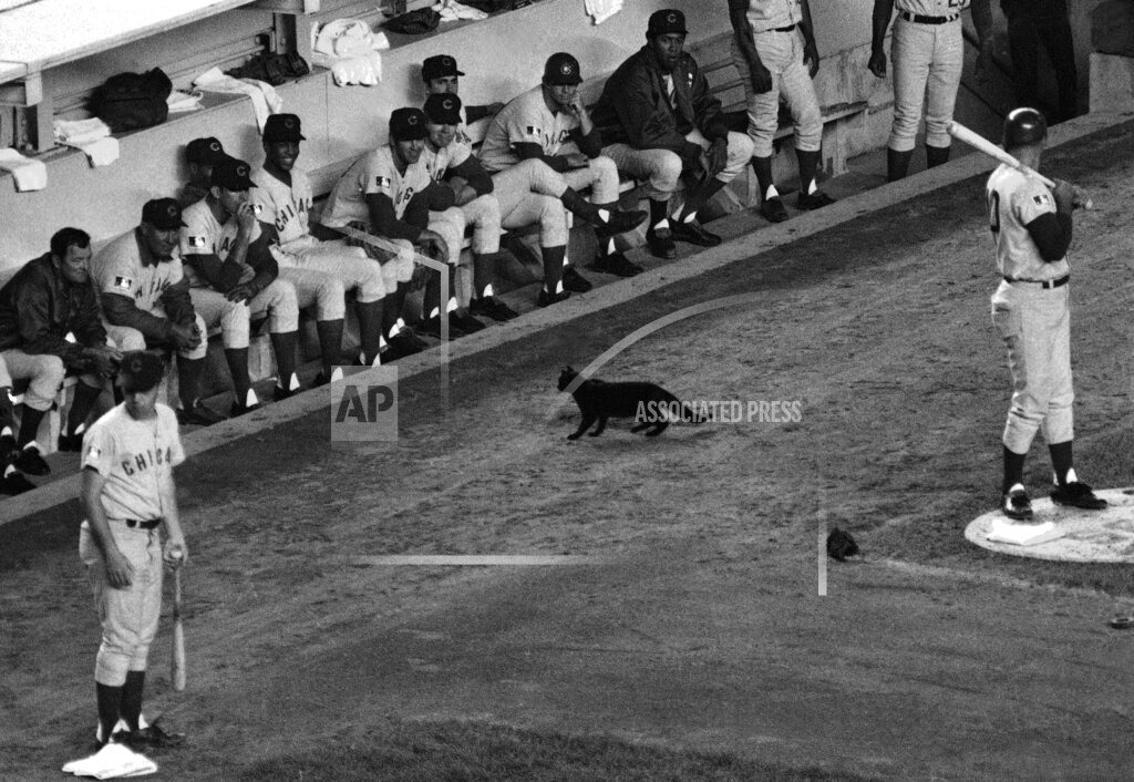 Cubsian Moments Baseball