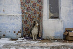 A dog stands outside a house as the snow falls at the Canada Real shanty town, outside Madrid, Spain, Friday, Jan. 8, 2021. An illegal informal settlement that has spread over several decades with mostly poor Spaniards, Roma people and Moroccan migrants seeking a place to live, La Cañada's poor housing and make-shift shacks stretches some 14 kilometers (9 miles) along what was once a drover's pathway on the Spanish capital's southeastern industrial outskirts. Nowadays, it's home to some 7,500 people of low or no income. (AP Photo/Manu Fernandez)
