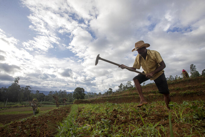 Sri Lankan vegetable farmer Pathmasiri Kumara removes weeds in his potato field in Keppetipola, Sri Lanka on July 1, 2021. Sri Lanka has cut back on imports of farm chemicals, cars and even its staple spice turmeric as its foreign exchange reserves dwindle, hindering its ability to repay a mountain of debt as the South Asian island nation struggles to recover from the pandemic. (AP Photo/Eranga Jayawardena)