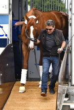 Assistant trainer Jimmy Barnes leads Triple Crown winner Justify from his transport on the backside at Churchill Downs, Monday, June 11, 2018, in Louisville, Ky. (AP Photo/Timothy D. Easley)