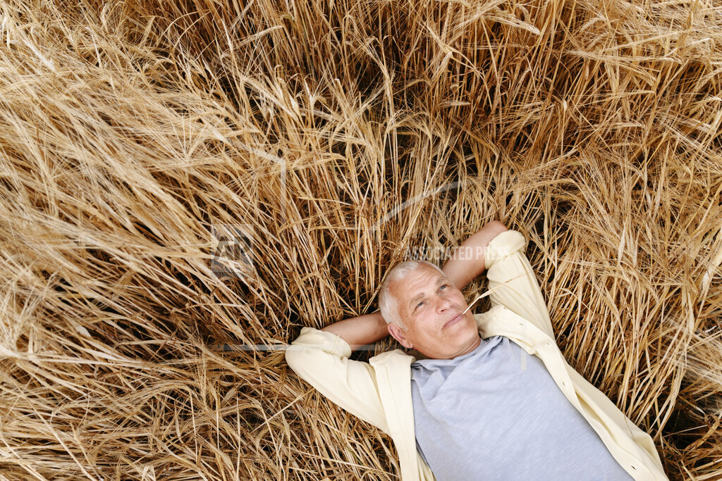 Senior man with hands behind head resting on wheat field