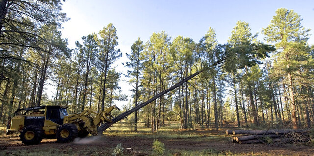 FILE - In this Aug. 25, 2009, file photo, logging equipment cuts down a tree near Reserve, N.M. A federal judge has halted tree-cutting activities on all five national forests in New Mexico and one in Arizona until federal agencies can get a better handle on how to monitor the population of the threatened Mexican spotted owl. First listed as threatened in the U.S. in 1993, the Mexican spotted owl is found in Arizona, New Mexico, Colorado, Utah, parts of West Texas, and Mexico. Regional officials with the U.S. Forest Service say the new understanding made public Wednesday. July 8, 2020, marked a positive step in an ongoing battle over the Mexican spotted owl. (AP Photo/Chris Carlson, File)
