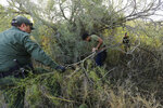 In this Wednesday, Nov. 6, 2019, photo, Border Patrol agents apprehend a man thought to have entered the country illegally, near McAllen, Texas, along the U.S.-Mexico border. In the Rio Grande Valley, the southernmost point of Texas and historically the busiest section for border crossings, the U.S. Border Patrol is apprehending around 300 people daily. That's down from as many as 2,000 people a day in May.  (AP Photo/Eric Gay)