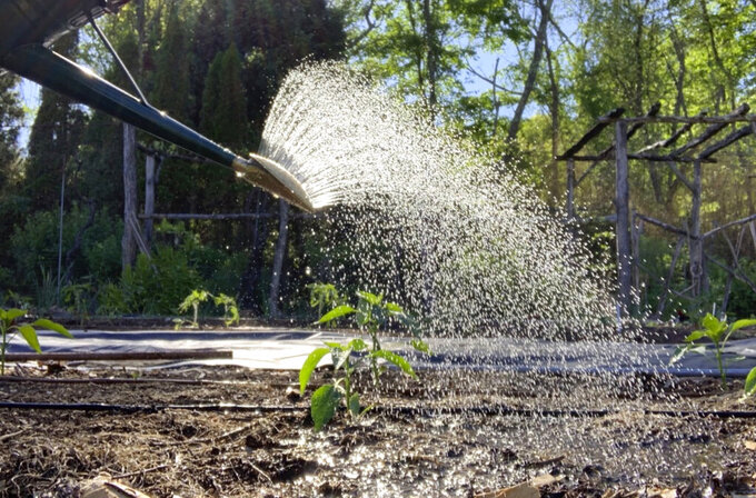 This undated photo shows water leaving a watering can in New Paltz, NY. The amount of water in the watering can and the area over which that water spreads can tell you if you've watered enough, but not too much. (Lee Reich via AP)
