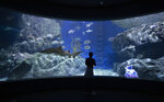 A visitor tours tours the Sea Life Bangkok Aquarium in Bangkok, Thailand, Tuesday, June 2, 2020. Thai authorities have allowed the aquarium and other businesses to reopen as they selectively ease restrictions protecting against the coronavirus. (AP Photo/Sakchai Lalit)