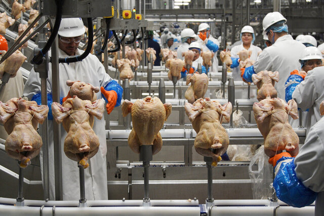 FILE - In this Dec. 12, 2019, file photo workers process chickens at the Lincoln Premium Poultry plant, Costco Wholesale's dedicated poultry supplier, in Fremont, Neb. U.S. wholesale prices rose 0.3% in August 2020, just half the July gain, as food and energy prices decline. The Labor Department said Thursday, Sept. 10 that the August advance in the producer price index — which measures inflation before it reaches consumers — followed a 0.6% surge in June which was the biggest monthly gain since October 2018.  (AP Photo/Nati Harnik, File)