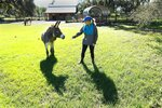 Jessie Miller tries to coax Zimba, a slightly skittish donkey over for some attention at Epic Farm Friday, Oct. 30, 2020. Miller runs Epic Farm, a farm animal rescue facility located on Lem Turner Road on Jacksonville's far north side. Miler started EPIC Animal Outreach, a nonprofit that provides educational outreach to children and adults using rescued farm animals that get to live out their lives on her 7-acre farm. (Bob Self /The Florida Times-Union via AP)
