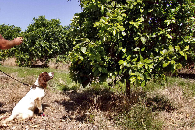 In this April 2016 photo provided by the United States Department of Agriculture, detector canine