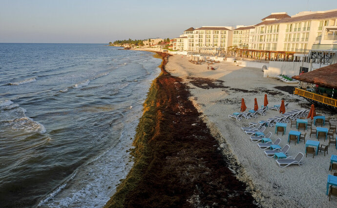 Sargassum seaweed covers the beach in Playa del Carmen, Mexico, Wednesday, May 8, 2019. Experts say the presence of sargassum seaweed is the new normal and residents are going to have get used to it. (AP Photo/Victor Ruiz)