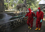 Indonesian firefighters spray disinfectant at the public area near an elephant enclosure at Ragunan Zoo prior to its reopening this weekend after weeks of closure due to the large-scale restrictions imposed to help curb the new coronavirus outbreak, in Jakarta, Indonesia, Wednesday, June 17, 2020. As Indonesia's overall virus caseload continues to rise, the capital city has moved to restore normalcy by lifting some restrictions, saying that the spread of the virus in the city of 11 million has slowed after peaking in mid-April. (AP Photo/Dita Alangkara)