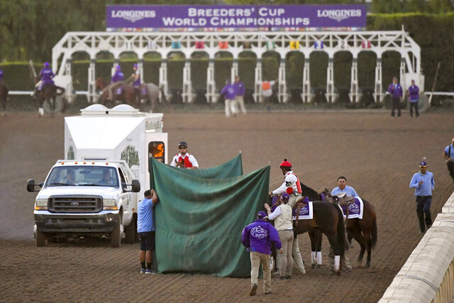 FILE - This Nov. 2, 2019, file photo shows track workers treating Mongolian Groom after the Breeders' Cup Classic horse race at Santa Anita Park, in Arcadia, Calif. Breeders' Cup Classic. A report released Tuesday, March 10, 2020, by the California Horse Racing Board on a spate of horse deaths at Santa Anita found that no illegal medications were used on the animals and 39% percent of the 23 fatalities occurred on surfaces affected by wet weather. The long-awaited report focused on 23 deaths as a result of racing or training between Dec. 30, 2018, and March 31, 2019. The fatalities roiled the industry and led track owner The Stronach Group to institute several reforms involving safety and medication. (AP Photo/Mark J. Terrill, File)