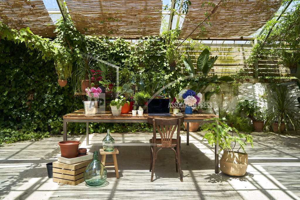 Various potted plants kept on wooden table at backyard