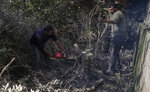 A Palestinian woodcutter uses a chainsaw to cut olive trees at a farm in the town of Jabaliya, Northern Gaza Strip, Sunday, Jan. 10, 2021. (AP Photo/Khalil Hamra)