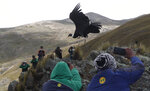 FILE - In this Tuesday, Feb. 23, 2021 file photo, scientists and journalists watch as an Andean condor is released into the wild by Bolivian veterinarians, on the outskirts of Choquekhota, Bolivia, as part of a project run by a state conservation program. The Andean condor, the world's heaviest soaring bird, is declining due to exposure to pesticides, lead and other toxic substances, said Sergio Lambertucci, a biologist at the National University of Comahue in Argentina. (AP Photo/Juan Karita)