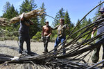 In this May 7, 2019, photo released by Cannabis Removal on Public Lands (CROP) Project, workers from Trinity County RCD/Watershed Center, along with Jackee Riccio, CROP Regional Field Director, third from left, prepare trash to be air lifted for disposal from a trespass grow complex where nearly 9,000 illegally cultivated cannabis plants where found in the Shasta-Trinity National Forest, in Calif. Authorities allege members of an international drug trafficking ring set up camp at the site months earlier. Along with the hundreds of pounds of harvested marijuana, they also found thousands of pounds of trash and more than three miles (4.8 kilometers) of plastic irrigation piping, according to the Trinity County Sheriff's Office. (Dane Curry/CROP Project via AP)