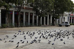 Pigeons at a parking lot on the first day of a lockdown amid concerns over the spread of Coronavirus, in New Delhi, India, Monday, March 23, 2020. Authorities have gradually started to shutdown much of the country of 1.3 billion people to contain the outbreak. For most people, the new coronavirus causes only mild or moderate symptoms. For some it can cause more severe illness. (AP Photo/Manish Swarup)