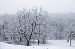Snow accumulates on trees at Fishburn Park in Roanoke, Va., on Monday, March 12, 2018. (Erica Yoon /The Roanoke Times via AP)