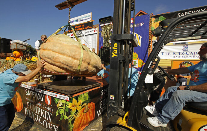 A massive pumpkin grin by Leonardo Urena of Napa, Calif., is lowered on a scale with a forklift on Monday, Oct. 14, 2019, in Half Moon Bay, Calif. The pumpkin weighed in at 2,175 lbs., a new California weight record. (AP Photo/Ben Margot)