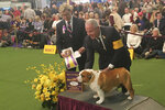 Thor the bulldog poses with handler Eduardo Paris after winning best of breed at the 144th Westminster Kennel Club dog show, Monday, Feb. 10, 2020, in New York. Thor has drawn quite a following after winning the National Dog Show televised on Thanksgiving Day. Person at left is unidentified.(AP Photo/Ginger Tidwell-Walker)