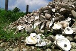 FILE- In this July 24, 2014 file photo, mounds of crumbled concrete and shucked oyster shells intended to be submerged to help rebuild oyster reefs sit along the roadside in Hopedale, La. Floodwaters carried down from the Midwest are killing oysters and driving crabs, shrimp and finfish out of Louisiana and Mississippi bays and marshes to saltier waters. (AP Photo/Stacey Plaisance, File)