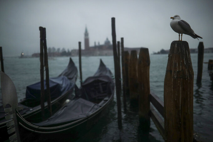 FILE - In this Sunday, March 1, 2020 file photo, a seagull stands on a pole next to parked gondolas at the lagoon on a rainy day in Venice. Activists opposed to cruise ships in Venice are seeking a meeting with the Italian government to argue that its latest proposal to re-route big ships away from St. Mark's Square doesn't address pressing environmental concerns about the fragile Venetian lagoon. (AP Photo/Francisco Seco, File)
