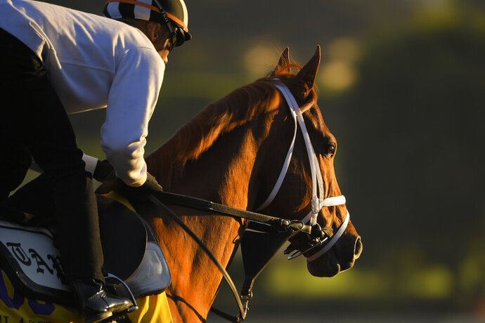 Vino Rosso, entered in the the Classic horse race, works out on the track at Santa Anita Park for the Breeders' Cup, Thursday, Oct. 31, 2019, in Arcadia, Calif. (AP Photo/Mark J. Terrill)