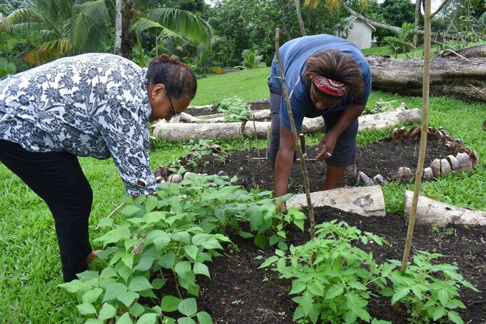 This July 2020 photo provided by Fiji's Ministry of Agriculture shows staff members of the Suva Christian School, Louisa John, left, and her colleague working in their garden in Suva, Fiji. Coronavirus infections have barely touched many of the remote islands of the Pacific, but the pandemic's fallout has been enormous, disrupting the supply chain that brings crucial food imports and sending prices soaring as tourism wanes. (Fiji Ministry of Agriculture via AP)