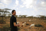 Gerald Erebon looks over livestock at the Archers Post settlement in Kenya on Sunday, June 30, 2019. Erebon has been an outcast all his life: Tall, light-skinned with wavy hair, he looks nothing like the dark-skinned Kenyan man listed as his father on his birth certificate, or his black mother or siblings. He and his family say that's because his biological father is the Rev. Mario Lacchin, an Italian priest of the Consolata Missionaries order who ministered in Archers Post, Kenya in the 1980s. (AP Photo/Brian Inganga)