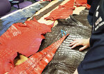In this photo provided by Interpol on Wednesday July 10, 2019, Border Force officers touch tanned Crocodylus niloticus skins seized by Border Force in England. The World Customs Organization and Interpol said they conducted 1,828 seizures across 109 countries in June and seized nearly 10,000 live turtles and tortoises, 23 live apes, 30 live big cats, hundreds of pieces of elephant tusk, half a ton of ivory and five rhino horns. (Interpol via AP)