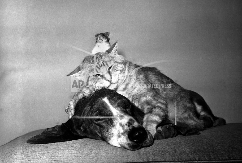 Watchf AP A  CA USA APHS331298 Animals Unusual Combos