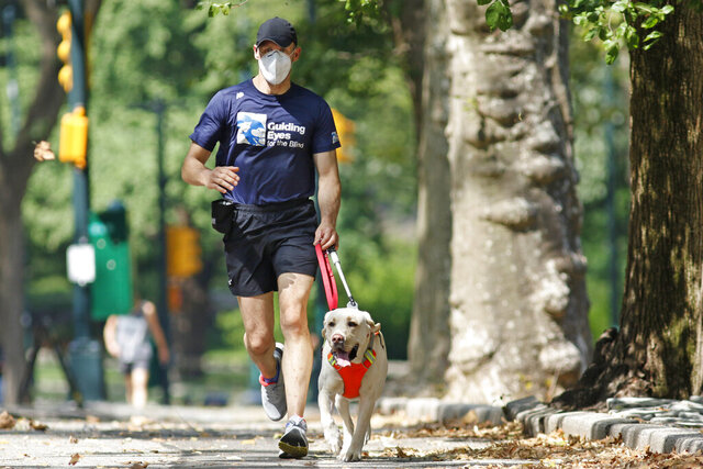 Thomas Panek runs with his running guide, Blaze, a Labrador retriever, Thursday, July 23, 2020, in Central Park in New York. Panek, a blind runner with a wall full of ribbons from marathons he ran with a human guide, developed a canine running guide training program five years ago after he became president and CEO of Guiding Eyes for the Blind in suburban New York. (AP Photo/Kathy Willens)