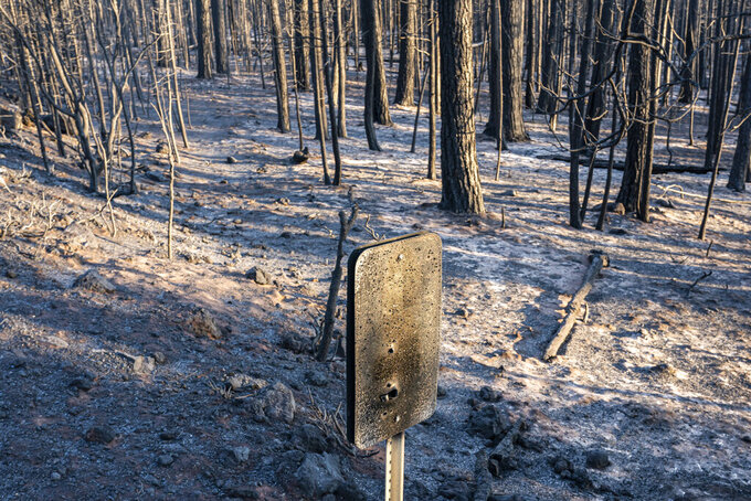 A fire-damaged mile marker sign hangs near trees burned by the Bootleg Fire on Wednesday, July 21, 2021 in Bly, Ore. (AP Photo/Nathan Howard)