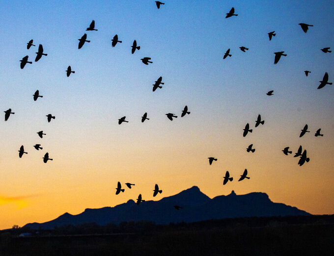 In this Feb. 11, 2021, picture taken by Arizona Republic photographer Nick Oza, birds fly across the U.S.-Mexico border as seen from Sonora, Mexico. Pulitzer Prize-winning photojournalist Oza, who documented the lives of disaster victims and immigrants, died Monday, Sept. 27, 2021, after being hospitalized more than three weeks with serious injuries from a traffic accident. He was 57. (Nick Oza/The Arizona Republic via AP)