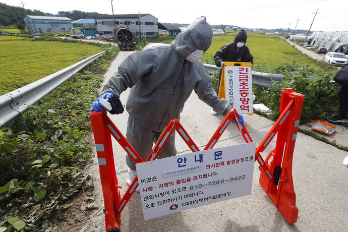 Quarantine officials wearing protective gears place barricades as a precaution against African swine fever at a pig farm in Paju, South Korea, Tuesday, Sept. 17, 2019. South Korea is culling thousands of pigs after confirming African swine fever at a farm near its border with North Korea, which had an outbreak in May. The notice reads: