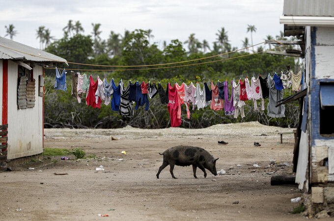 FILE - In this April 7, 2019, file photo, a pig walks outside a house in Nuku'alofa, Tonga. The largest cluster of places without the coronavirus can be found in the scattered islands of the South Pacific. Tonga, Kiribati, Samoa, Micronesia and Tuvalu are among those small nations yet to report a single case. But that doesn't mean they have been spared from the pandemic's effects. (AP Photo/Mark Baker, File)