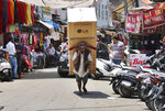 An Indian laborer talks on his mobile phone as he transports a refrigerator on his back at a market in Jammu, India, Sunday, June 7, 2020.  India whose coronavirus caseload is fifth highest in the world has partially restored trains and domestic flights and allowed reopening of shops and manufacturing. (AP Photo/Channi Anand)