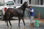 An exercise rider sprays water on a horse after a workout at Pimlico Race Course, Friday, May 15, 2020, in Baltimore. Horse racing is in a state of transition at a time usually reserved for Triple Crown season. The Preakness would have been run Saturday, May 16, 2020, in Baltimore. But Pimlico Race Course and many tracks across North America remain dark because of the coronavirus pandemic. There is some light at the end of the tunnel as tracks including Churchill Downs in Kentucky are getting back to live racing without fans. (AP Photo/Julio Cortez)