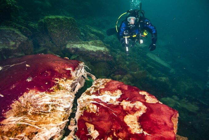 In this photo provided by the NOAA Thunder Bay National Marine Sanctuary a scuba diver observes the purple, white and green microbes covering rocks in Lake Huron's Middle Island Sinkhole. Feel like days are just getting longer? They are and it's a good thing because we wouldn't have much to breathe if they weren't, according to a new explanation for how Earth's oxygen rich atmosphere may have developed because of Earth's rotation slowing. Scientists provided evidence for this new hypothesis by lab testing gooey smelly purple bacteria from a deep sinkhole in Lake Huron. (Phil Hartmeyer/NOAA Thunder Bay National Marine Sanctuary via AP)