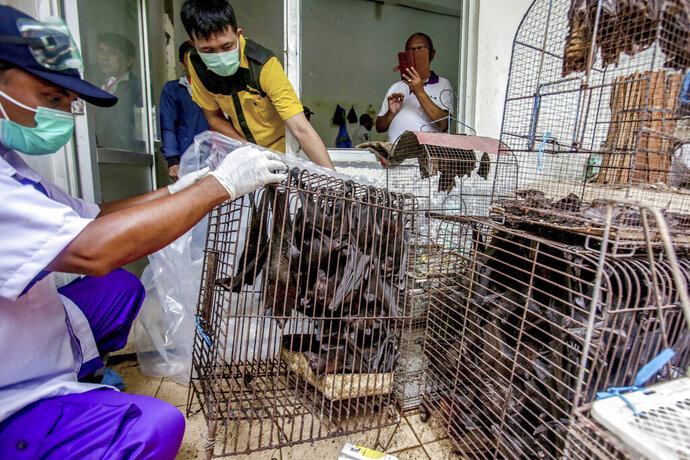 FILE - In this Saturday, March 14, 2020 file photo, health officials inspect bats to be confiscated and culled in the wake of coronavirus outbreak at a live animal market in Solo, Central Java, Indonesia. The World Health Organization said Friday May 8, 2020, that although a market in the Chinese city of Wuhan selling live animals likely played a significant role in the emergence of the new coronavirus, it does not recommend that such live markets be shut down globally. (AP Photo, File)