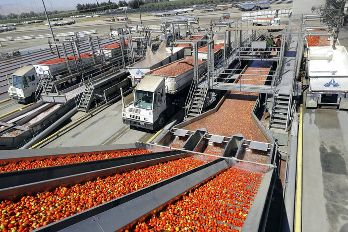 FILE- In this Sept, 17, 2018, file photo tomatoes go through a washing process at the Los Gatos Tomato Products plant in Huron, Calif. On Friday, Nov. 9, the Labor Department reports on U.S. producer price inflation in October. (AP Photo/Marcio Jose Sanchez, File)