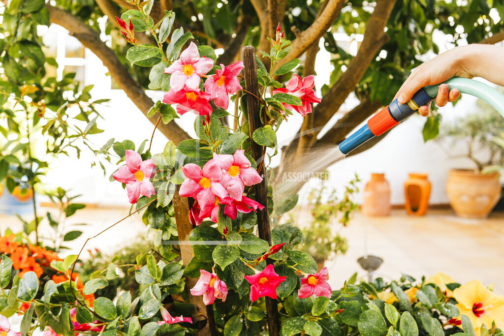 Woman watering plants through hose in garden