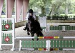 Kirsty Wright, 32, of Odessa, jumps with her nine-year-old pony, Noelle, on Monday, Aug. 12, 2019, at Winding Oaks Equestrian Center in Masaryktown, Fla. Noelle was found in a wooded area in Jacksonville in 2017 and was adopted by Wright, a student, who has a goal to compete with Noelle in the Pony Finals (event). (Douglas R. Clifford/Tampa Bay Times via AP)