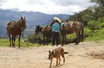 A woman rests with her horses in Puna, Peru, the town where Free Peru party presidential candidate Pedro Castillo works as a teacher and where his parents live, Friday, April 16, 2021. Castillo, who has proposed rewriting Peru's constitution and deporting all immigrants living in the country illegally who commit crimes, will face rival candidate Keiko Fujimori in the June 6 presidential run-off election. (AP Photo/Martin Mejia)