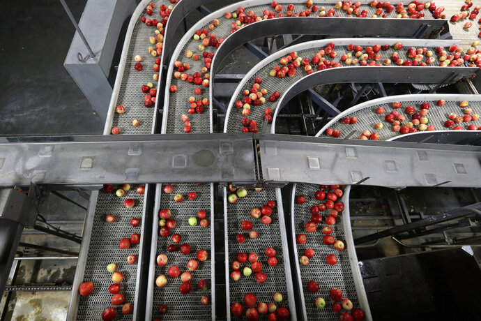 FILE - In this Oct. 15, 2019, file photo gala apples are moved along a conveyor system after being sorted as they move to be prepared for shipping in a packing house in Yakima, Wash. On Thursday, Nov. 14, the Labor Department reports on U.S. producer price inflation in October. (AP Photo/Elaine Thompson, File)