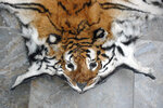 This July 2011 photo provided by the Wildlife Trust of India shows a tiger skin that was seized by Indian law enforcement authorities at the border with Bhutan. Since the country announced its 2020 COVID-19 lockdown, at least four tigers and six leopards have been killed by poachers, Wildlife Protection Society of India said. (WTI via AP)